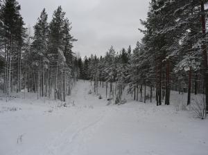 Ryssänmontun pulkkamäki talvella 2015. Kuva Kirsi Jaakkola.