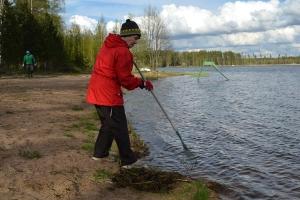 Valkiajärven uimarannan siivoustalkoot järjestettiin 20.05.2015. Kuva: Kirsi Jaakkola